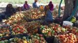Les parcelles de démonstration : Les premiers récoltes sur le marché